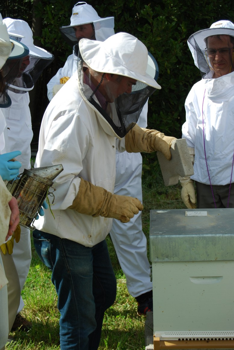 on-va-ouvrir-la-ruche