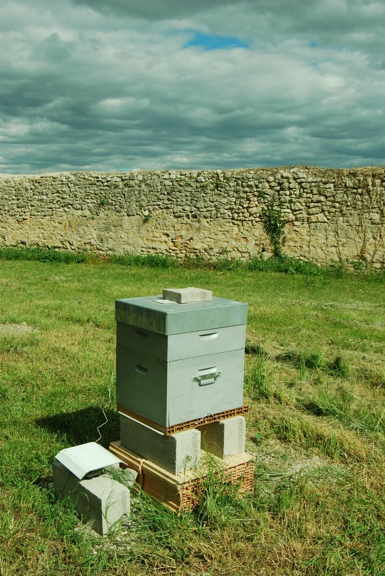 la-ruche-et-son-thermomtre-interne