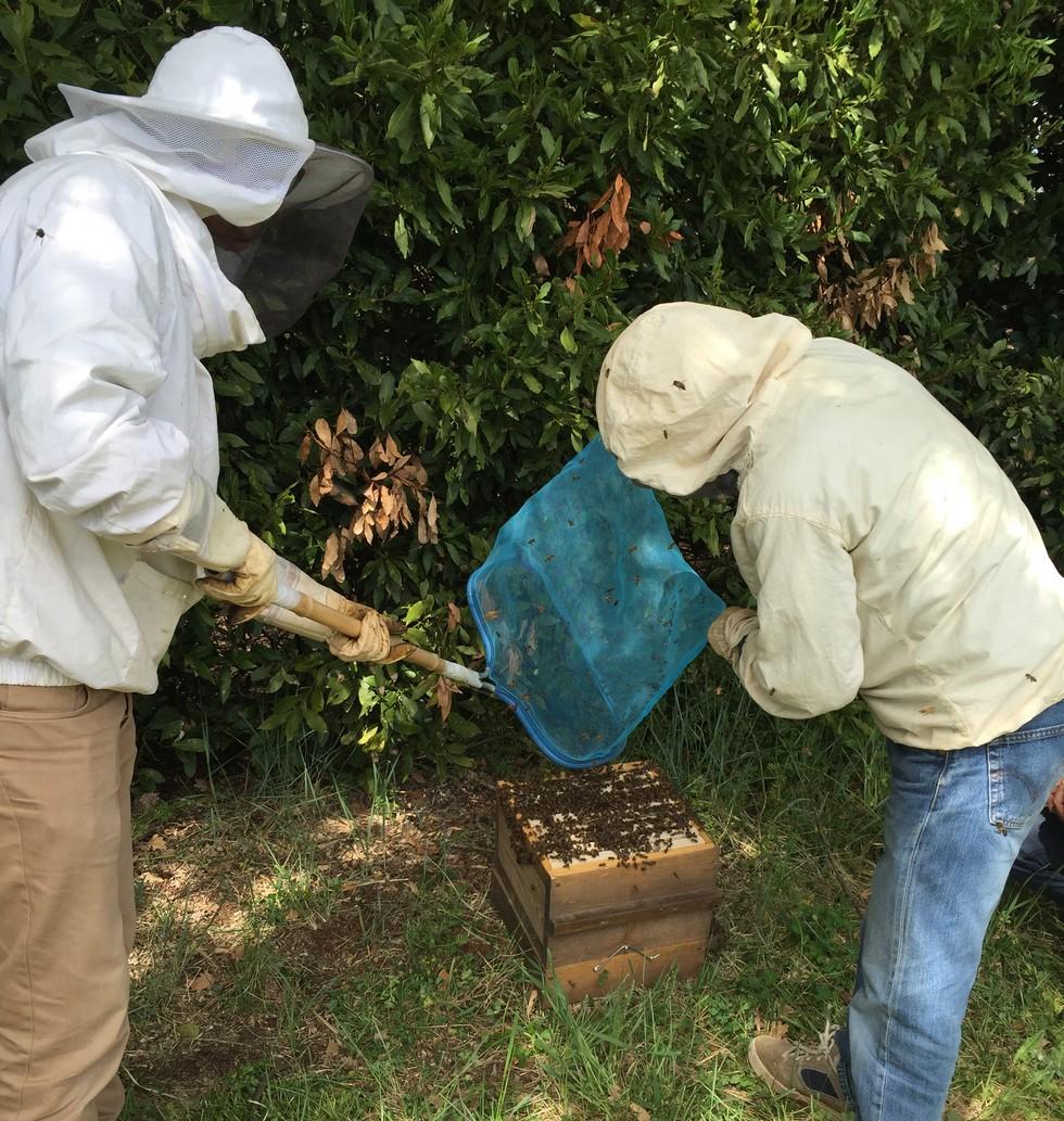 pche-aux-abeilles