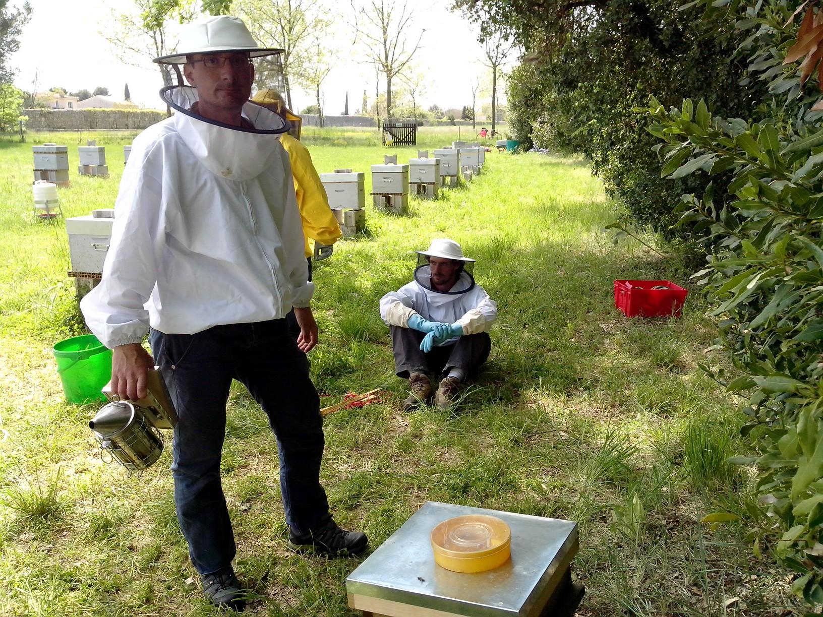 warr-en-attente-de-rentre-des-abeilles