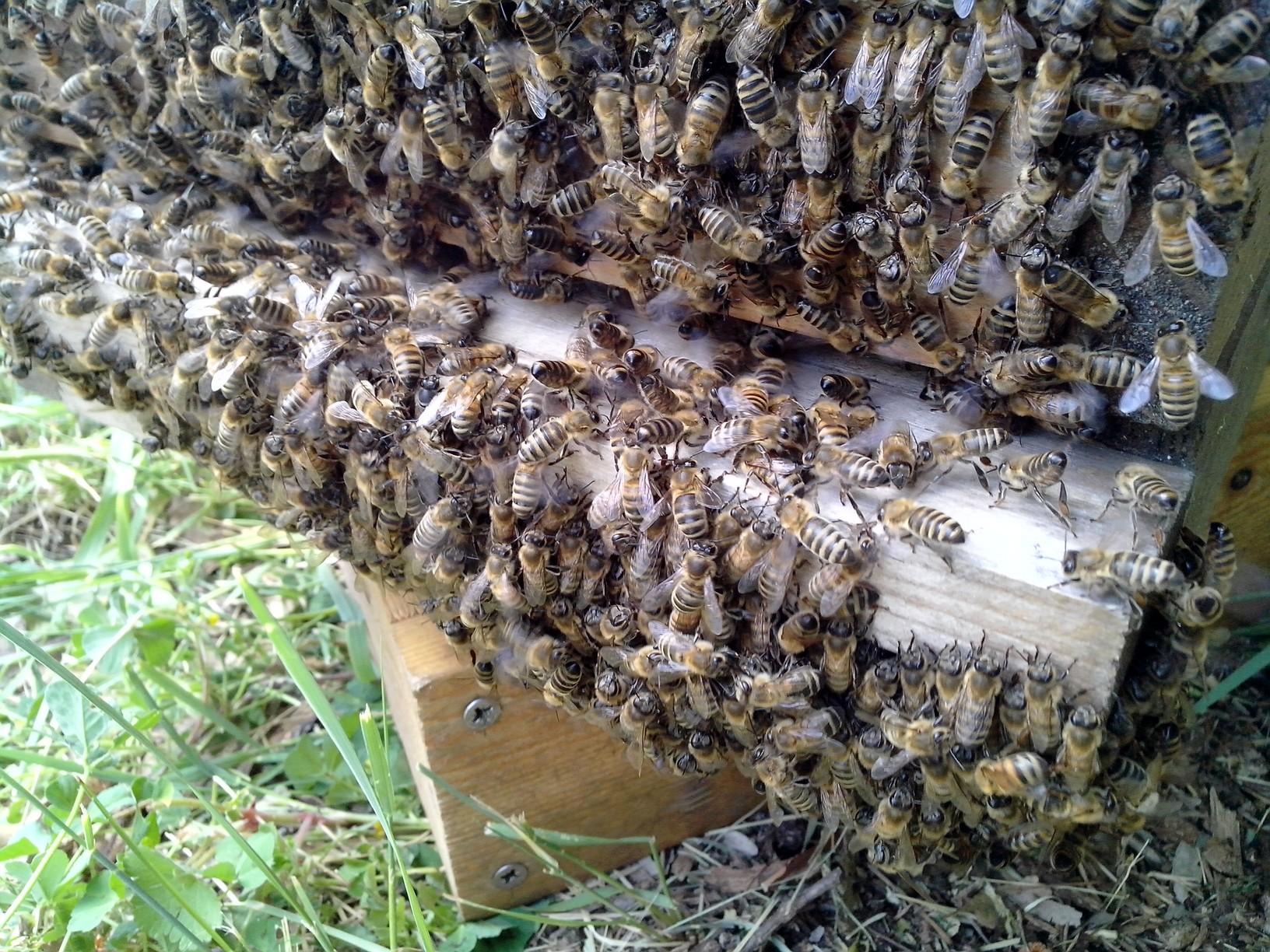 warr-entre-des-abeilles