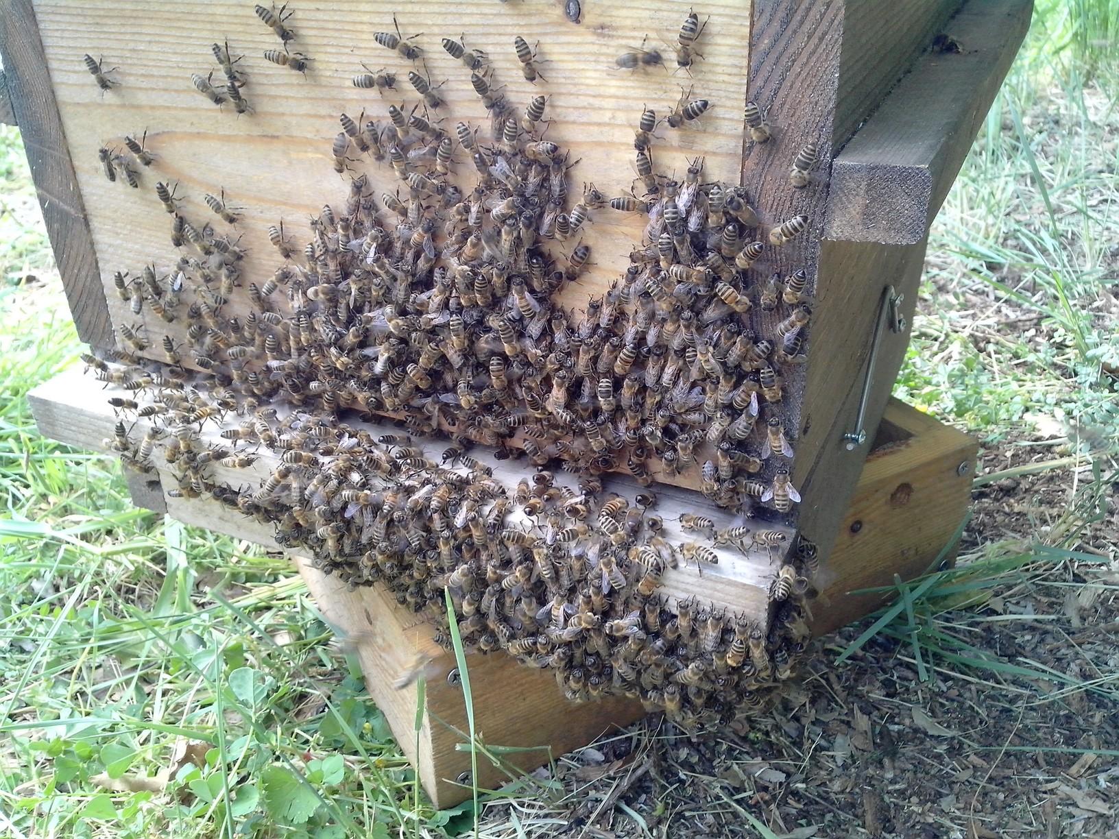 warrles-abeilles-battent-le-rappel