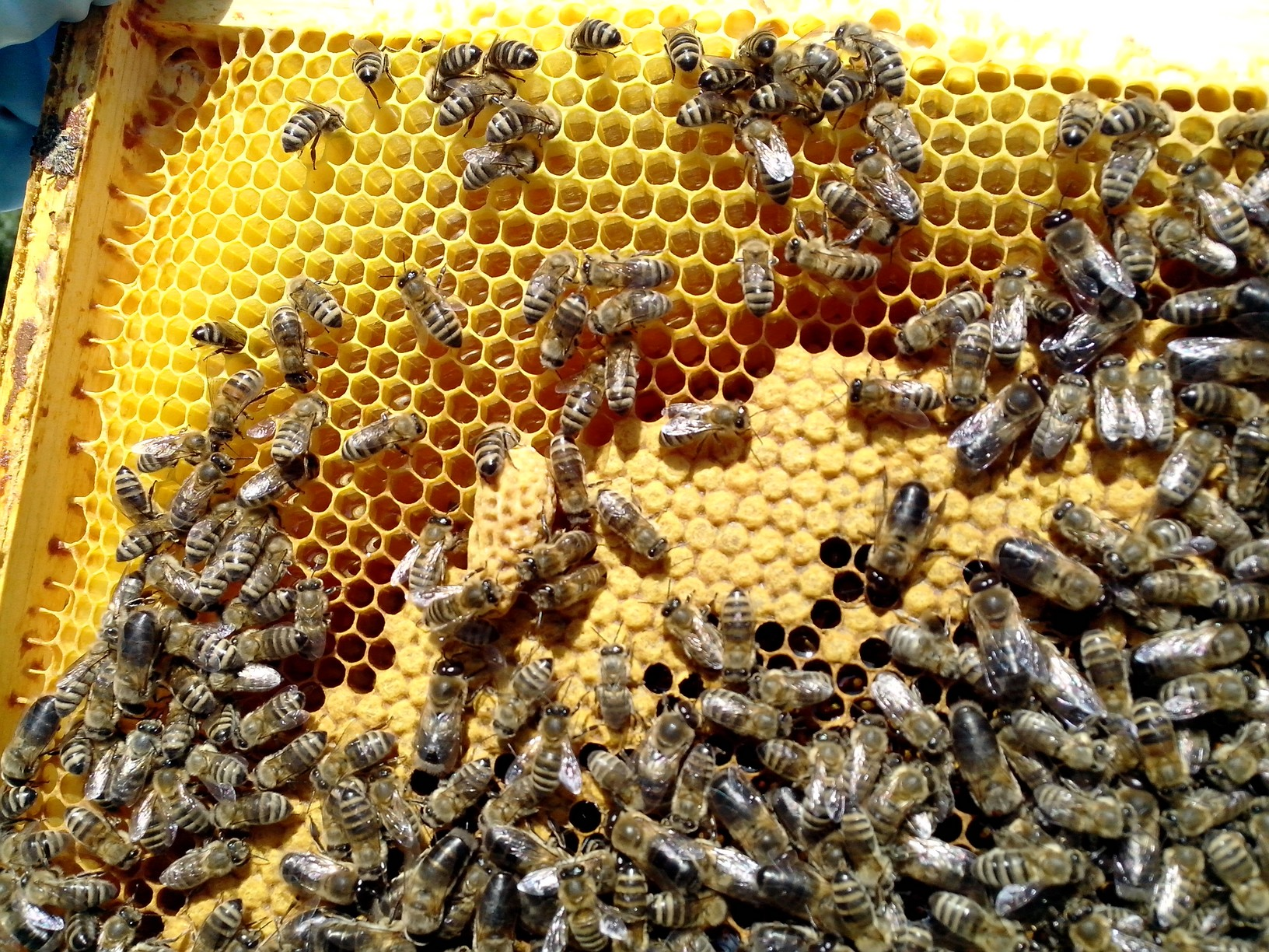 ruche-25-cellules