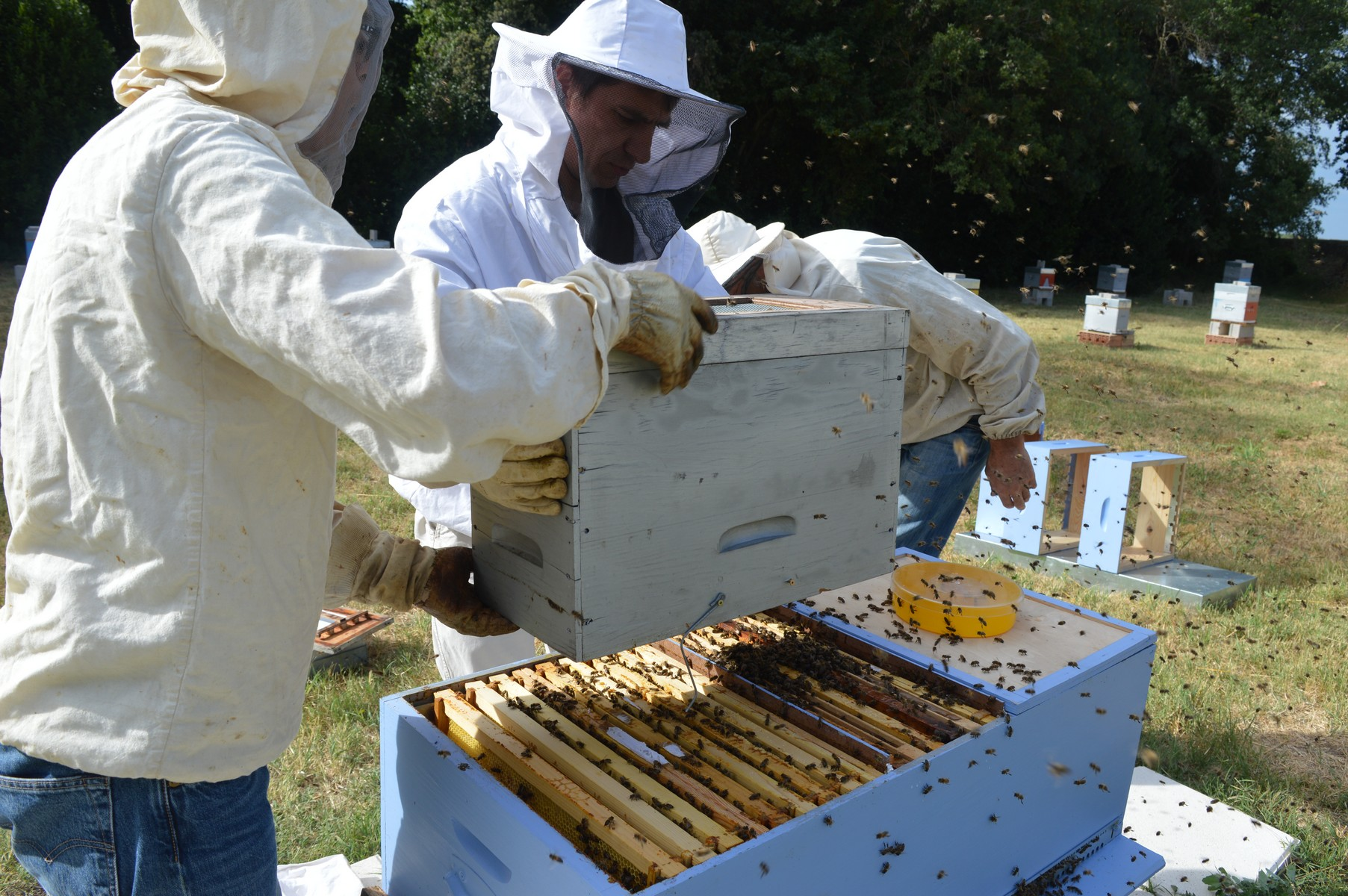 retour-abeilles-starter