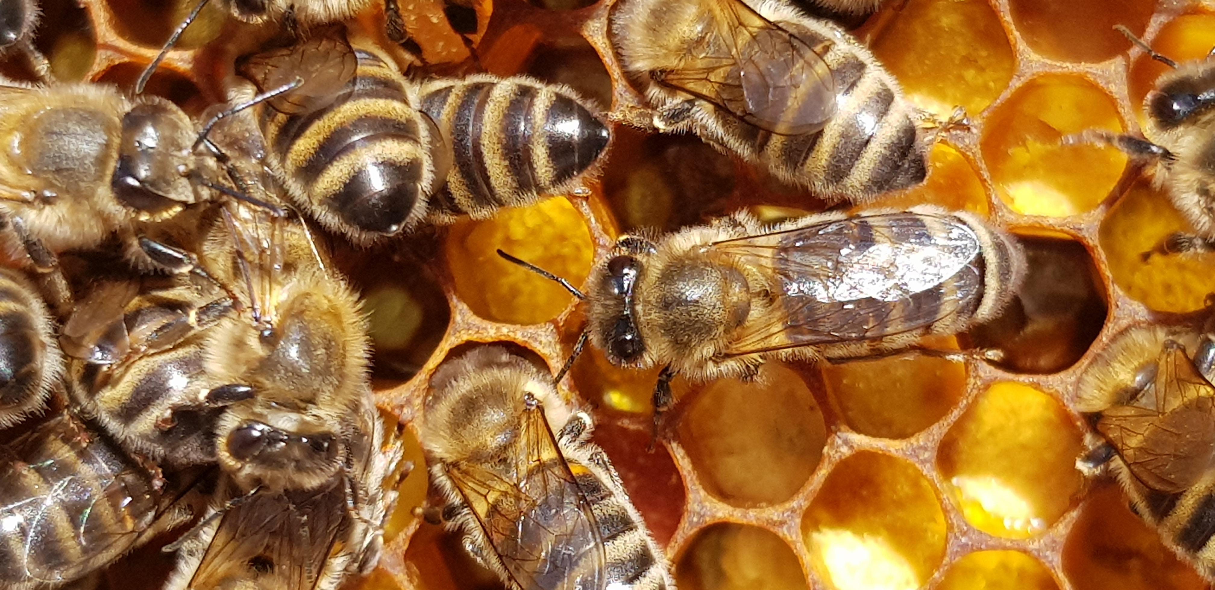 dans-la-ruche
