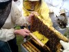 brosse-abeilles
