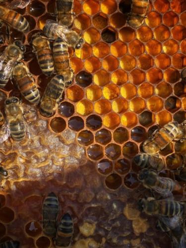 pollen sur cadre